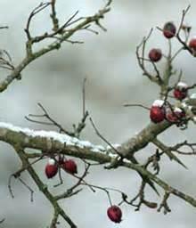 imagenes naturaleza invierno fotos de la naturaleza en invierno