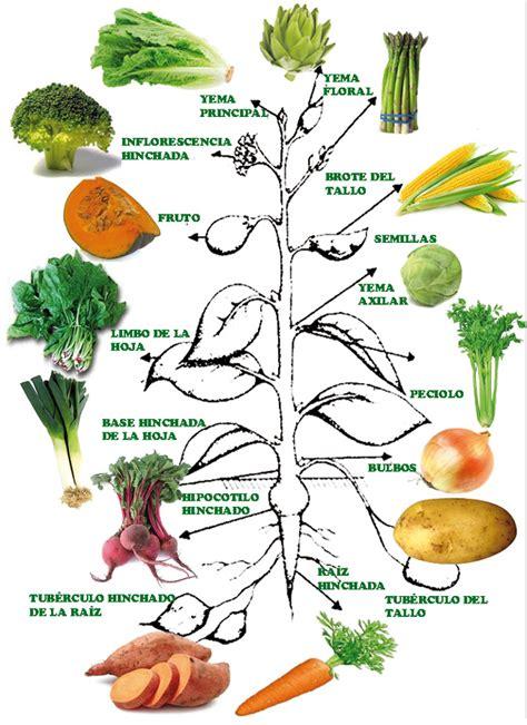 cadena de valor hortalizas aprendamos horticultura clasificaci 243 n de las hortalizas