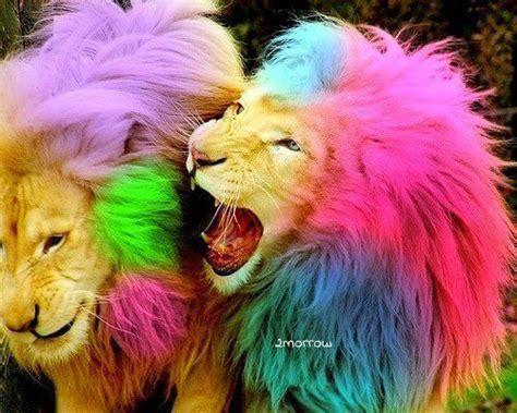 Imagenes De Leones Swag | de que color son los leones imagui