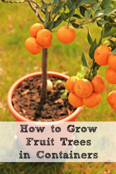how to grow apple trees in backyard 199 best images about garden on pinterest