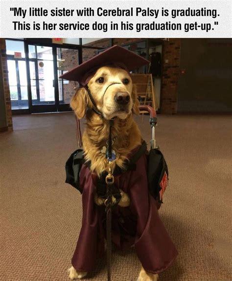 service dog  graduation outfit pictures   images  facebook tumblr pinterest