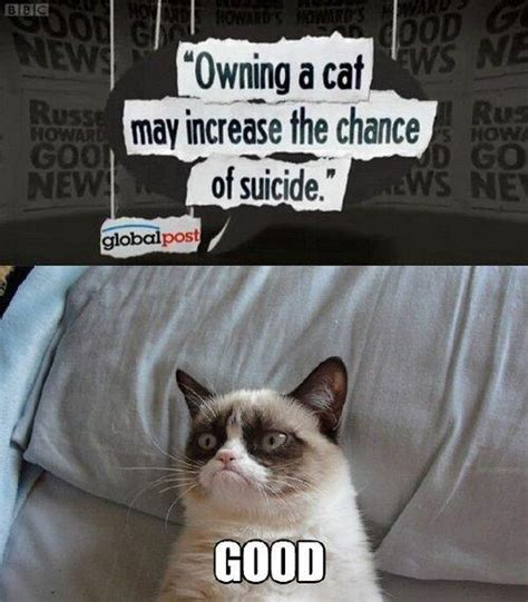 Grumpy Cat Love Meme - image 445109 grumpy cat know your meme