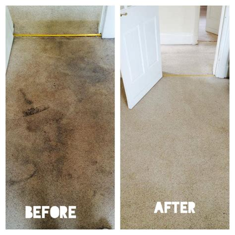 rug cleaning glasgow carpet cleaner glasgow glasgow carpet cleaning