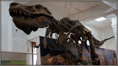 Fosil Gajah Daging berkunjung ke museum geologi bandung iwing s