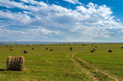 green grass the field plain the distance seno soloma les