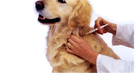 Vaksin Dan Obat Cacing apa yang harus dilakukan sebelum vaksin pertama