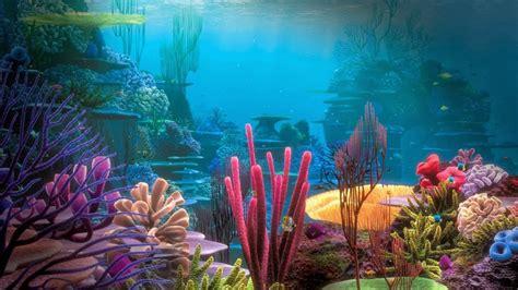 pemandangan alam bawah laut foto dunia alam semesta indonesia