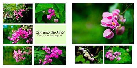 cadena de amor up coffee table book cadena de amor spread cover on
