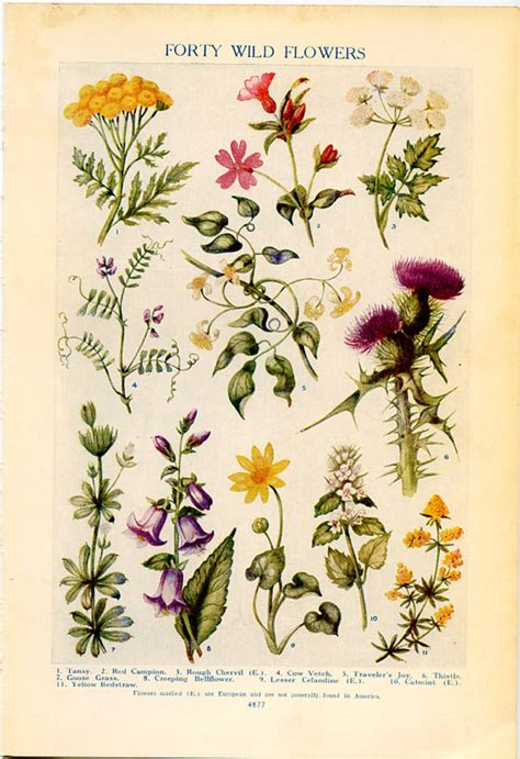 libro botanical drawing in color vintage botanical prints forty wild flowers 1926 lithographs for framing wild flowers