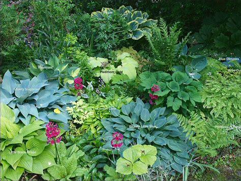 pflanzen f 252 r nordseite pflanzen nordseite haus bestseller