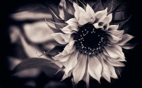 wallpaper black with flowers wallpaper of flowers black and white black flower