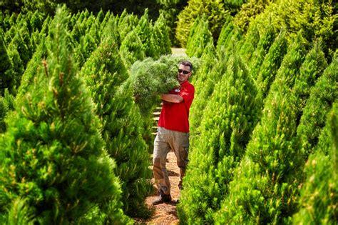 choose and cut trees in illinois choose cut tree farm