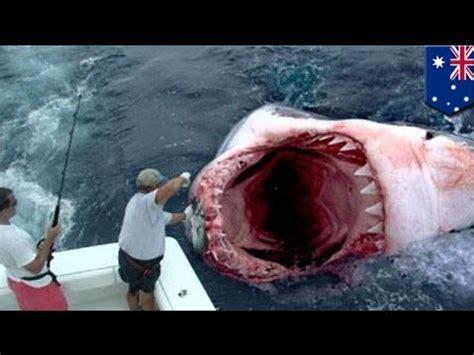 Octopus Sofa Megalodon Found Giant Great White Shark Eaten By Bigger