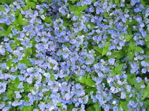 ground cover options over flower bed by laurenr