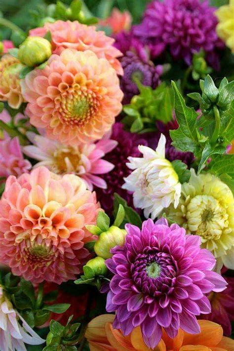 dahlia tender perennials in pa dig the tubers and