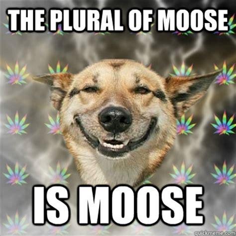 Moose Meme - the plural of moose is moose stoner dog quickmeme