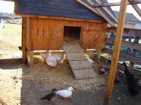 backyard duck house duck house r backyard chickens