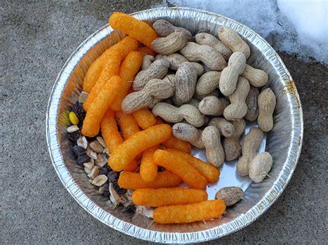 squirrel food flickr photo sharing