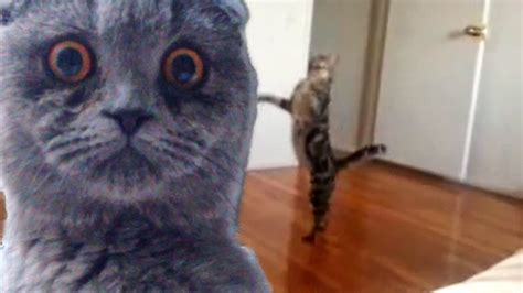 epic film cat3 epic funny cats compilation part two the cat strikes
