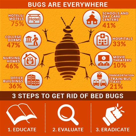 how to clean bed bugs bed bugs in edmonton what can be done you kill bed bugs