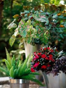container gardens for shade container garden recipes for shade