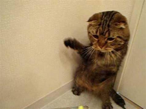 Hair Dryer Jokes jokes cat hates the hair dryer