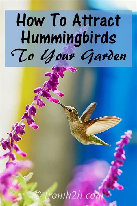 the 25 best hummingbird flowers ideas on pinterest