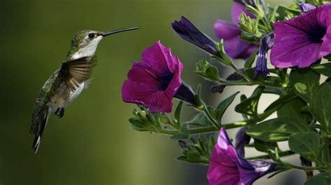 imagens de flores e rosas beija flores na natureza youtube