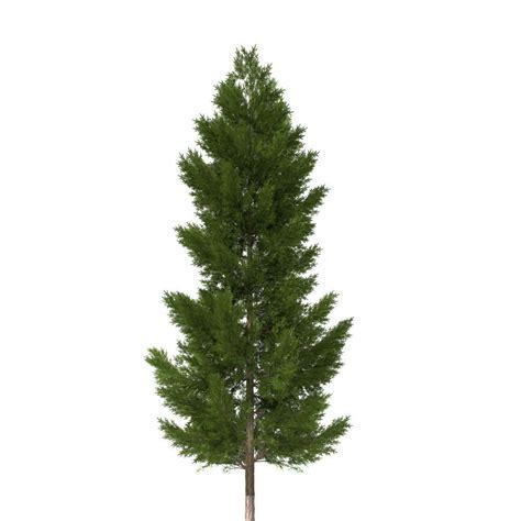 The Pine Tree pine tree collection 3d model obj 3ds fbx 3dm dwg mtl
