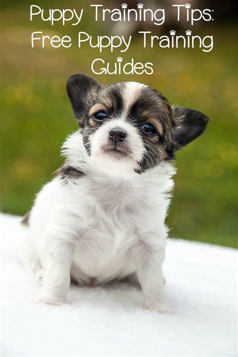 puppy tips puppy tips free puppy guides