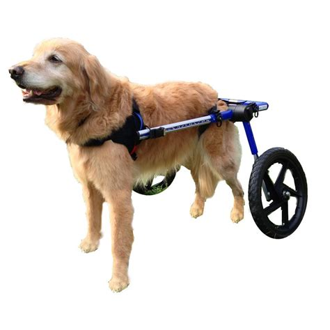 wheels for dogs why do dogs like their bellies rubbed doggiedemeanor