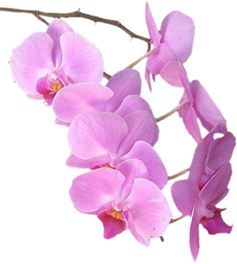 Imagenes Flores Sin Fondo | fotoimagenes sinpalabras flores png tubos sin fondo