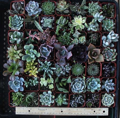 amazon succulents diy recycled succulent planter garden living and making