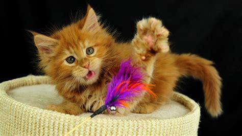 imagenes tiernas de niños jugando gatito jugando hd fondoswiki com