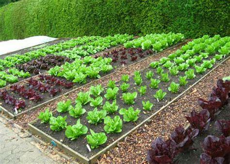 garden ground tech mn