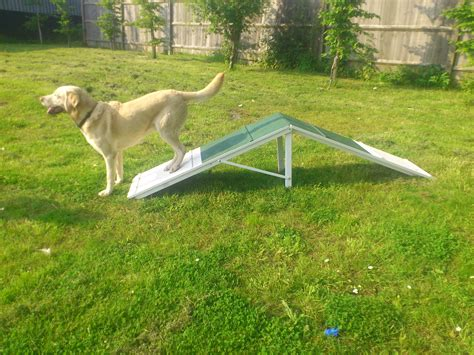 puppy agility equipment agility equipment mini a frame breeds picture