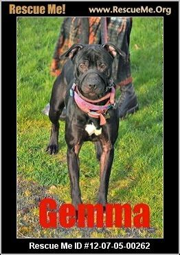 pitbull puppies oregon 1000 images about cats dogs in no kill shelters that still need adoption on