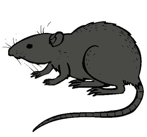 imagenes de ratas halloween dibujo de rata subterr 225 ena pintado por saul en dibujos net