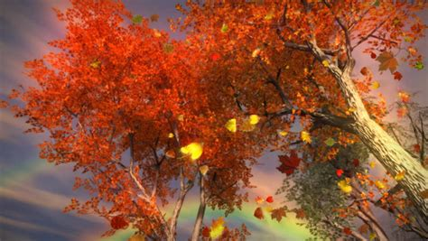 1035 fall trees falling leaves and rainbow storm stock