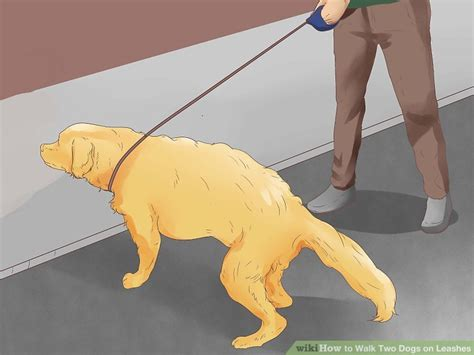 how to two dogs to walk on a leash how to walk two dogs on leashes 15 steps with pictures