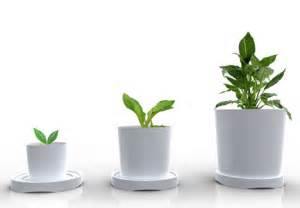 in door plants pot video three four plants argements 3 sizes in 1 plastic pot grows out as your plants grow up