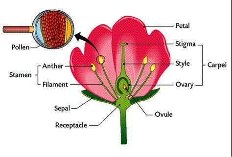 plant reproduction diagram bio world plant reproduction