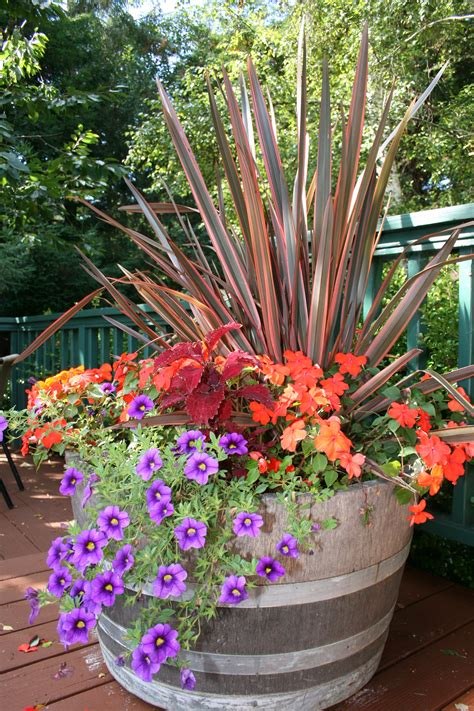 ideas for container gardens fall color container planting idea coast gardening