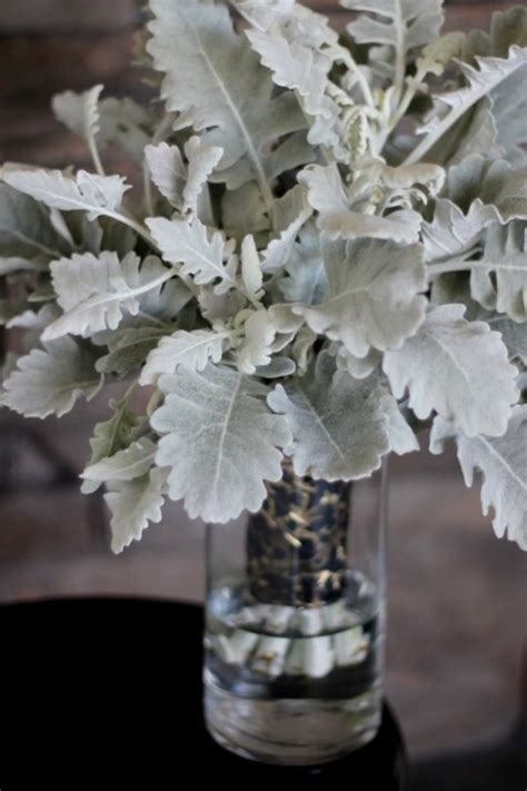100% Dusty Miller Bouquet   Floret Cadet