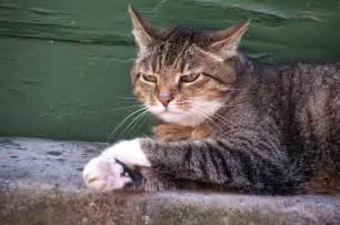 haus katze wildkatze und hauskatze wildes wissen