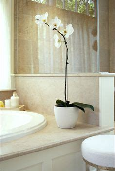can you put a tv in the bathroom orkide on pinterest orchid arrangements white orchids and orchids