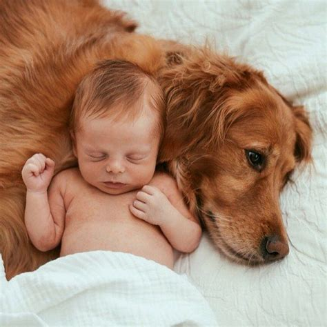 babies with puppies 25 best ideas about baby on babies angle foto and