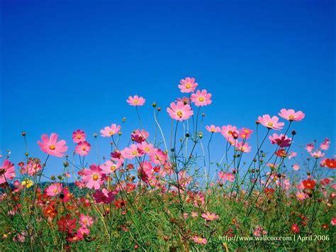 Spring Flower Desktop Backgrounds Wallpaper Cave Free Flower Backgrounds Wallpaper Cave