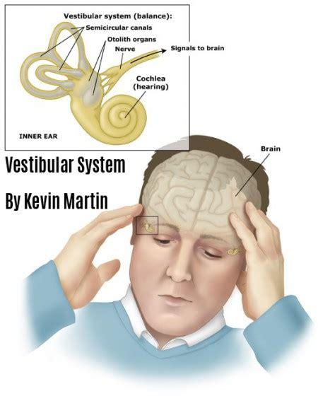 vestibular nerve definition vestibular system react