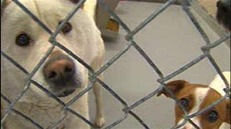 amarillo puppies amarillo spca to host event for national pet adoption